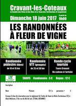 18-06-2017_rando_à_fleur_de_vigne_cravant_les_coteaux